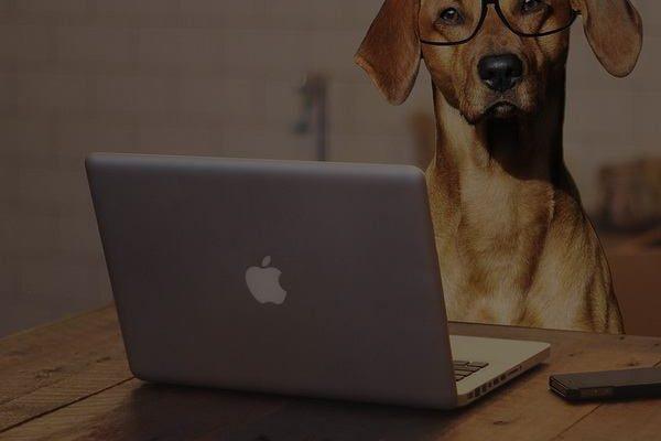 dog gadgets for communication