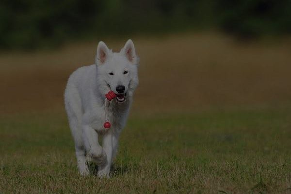 dog gadgets for SPORTS & TRAINING