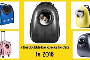 cat bubble backpacks