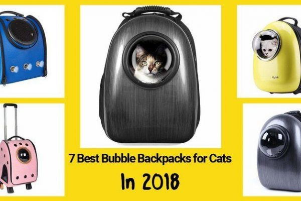 cat bubble backpacks