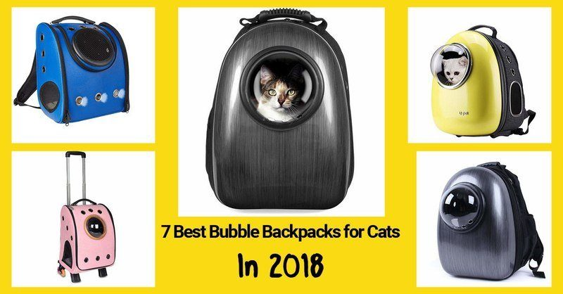 011c3a21ebea 7 Best Cat Bubble Backpacks in 2019  Let s Adventure!
