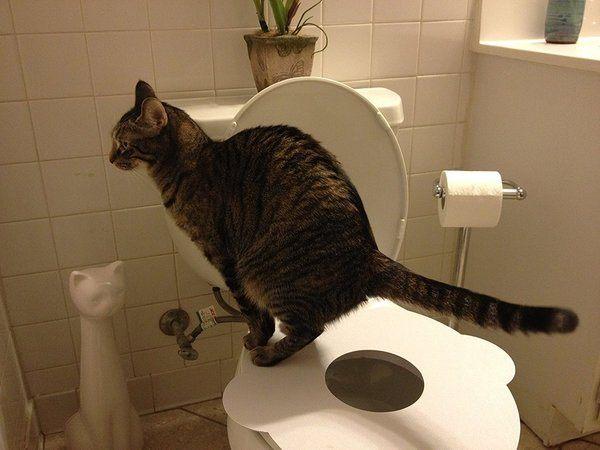 Kitty's Loo Seat