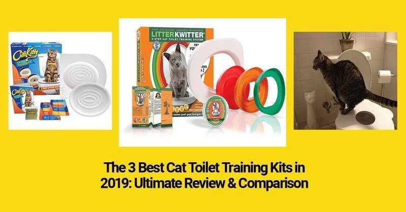 Best Cat Toys 2020.Technomeow The Latest Cat Gadgets Innovative Cat Toys Reviews