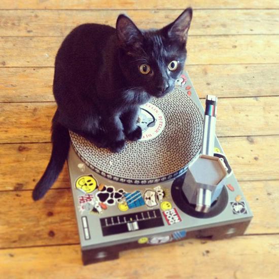 Suck UK Cat Scratching DJ Deck experience