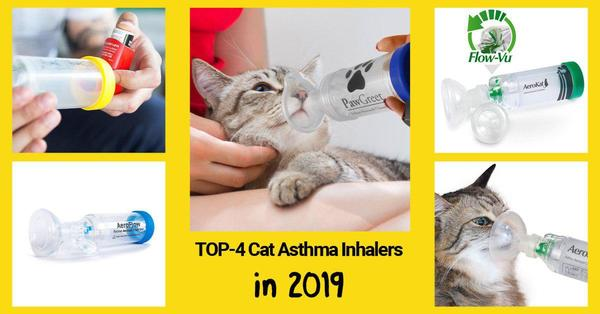 Best Cat Inhalers in 2019