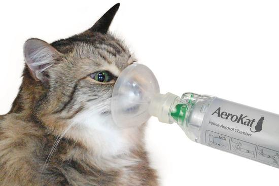 aerokat asthma inhaler with the mask in the cat
