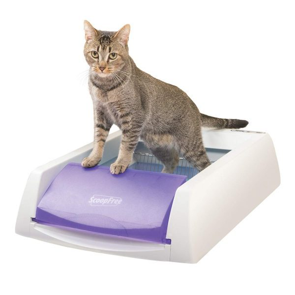 8 Best Self Cleaning Litter Boxes For Cats In 2019 Technomeow