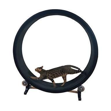 climbing cat exercise wheel
