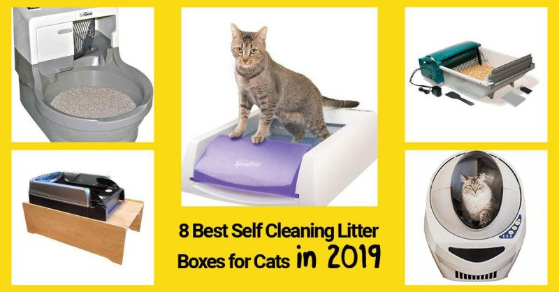 8 Best Self Cleaning Litter Boxes For Cats In 2019 All
