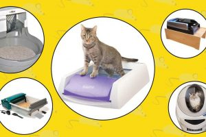 self cleaning and scoop free cat litter boxes