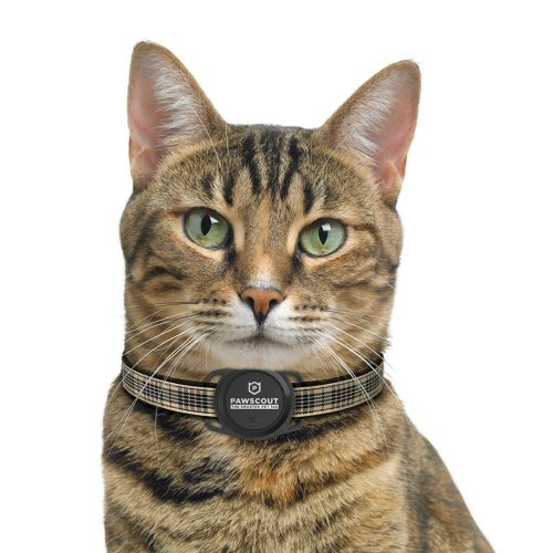 cat-with Pawscout Smarter Tag 2.0