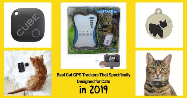 list of best GPS cat trackers 2019