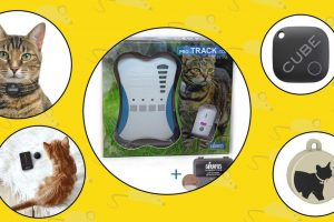 different cat gps trackers 2019
